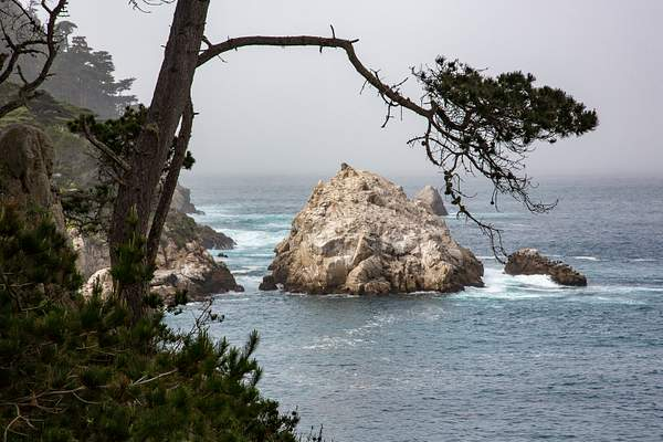 Point Lobos-5