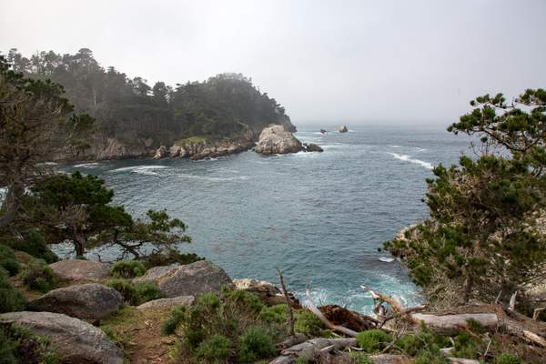 Point Lobos-4