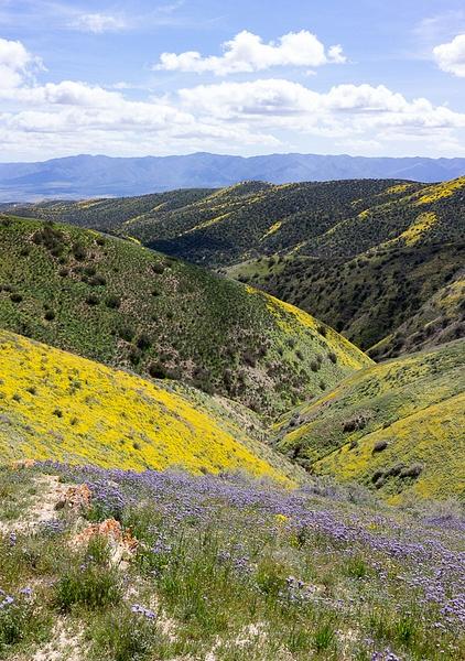 Carrizo Plain by Harrison Clark