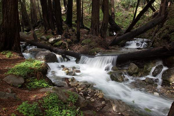 Limekiln State Park-6.jpg