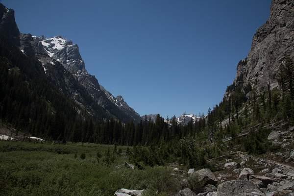 Cascade Canyon-Moose in the Meadow