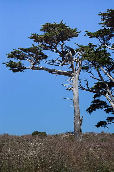 Point Reyes June 2010-7