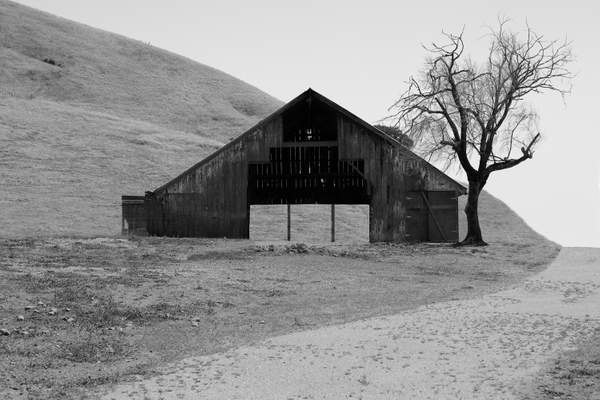 Point Reyes Barn and Tree