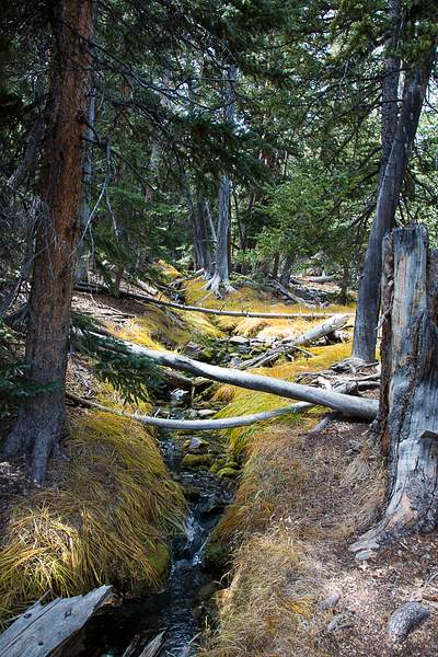 Great Basin NP-12