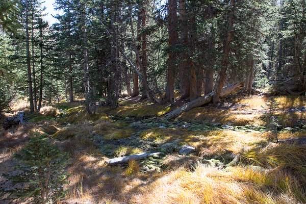 Great Basin NP-31