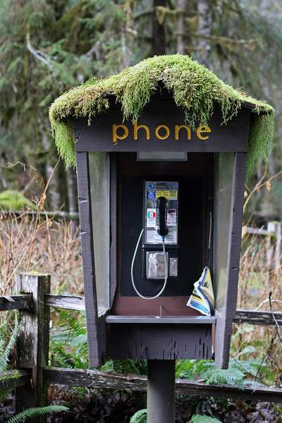 One of the Last Pay Phones, Ho Rainforest, Olympic National Park, Washington