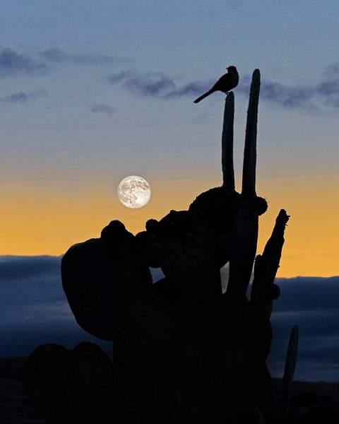 Moon Rise in San Miguel, CA, ©2010 Tom Debley