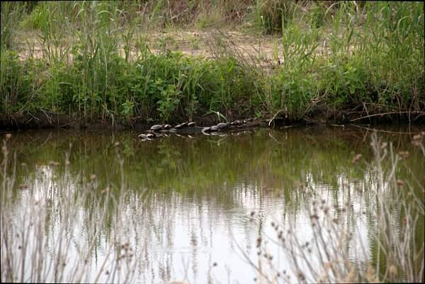 Turtle_Pond_3