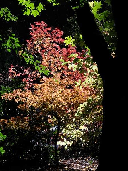 Oregon Colors