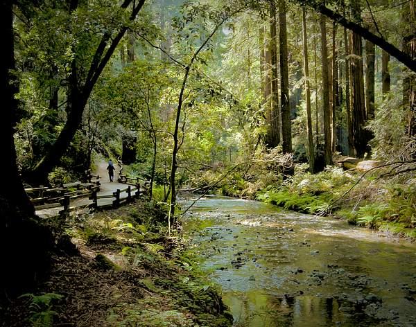 Creek Walker
