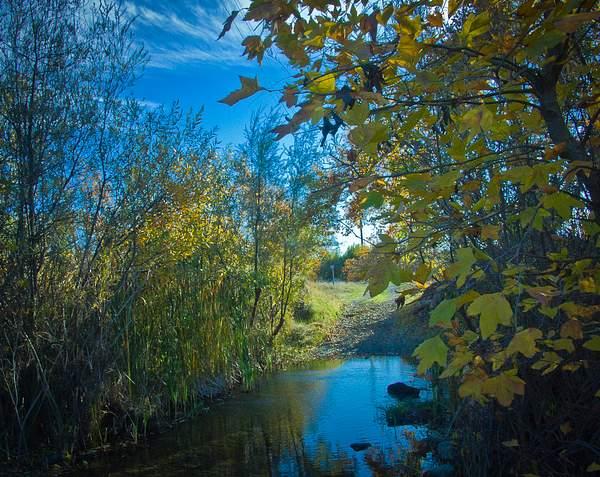 Creek-Sycamore Grove