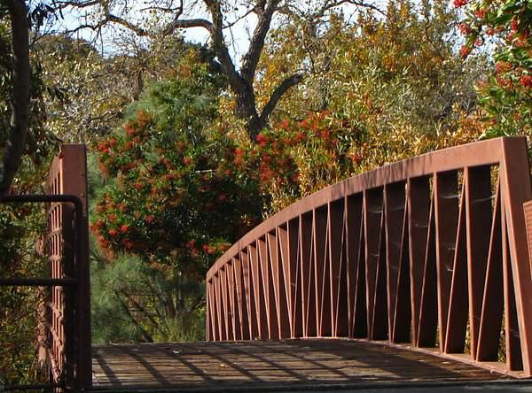 Bridge_into_the_wilderness_x