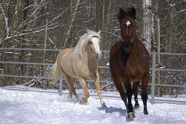 HORSES by Sleran