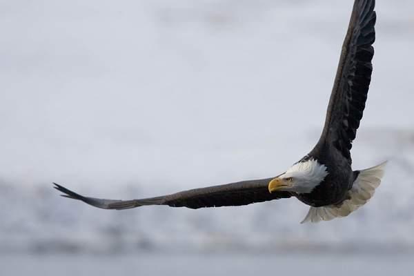 Eagle Flight 1