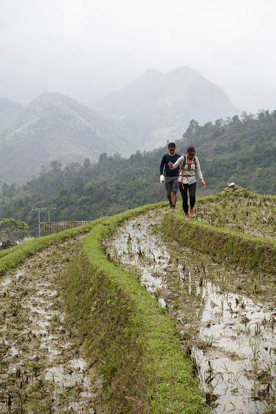 Fallow Rice Terrace