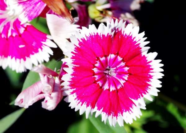 Flowers0023