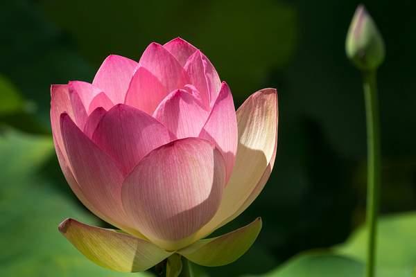 20140528-HeritagePark-Flowers-11