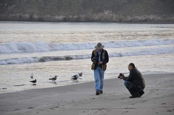 Birds watching photographers